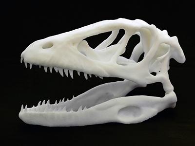 craniu dinozaur printat 3d