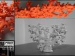 Coral print 3D