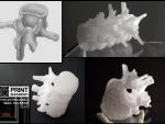 Vertebre printate 3D model Mimics.jpg